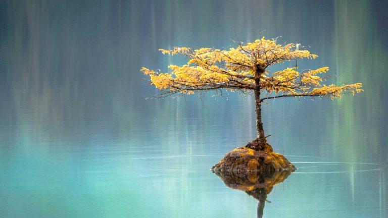 tre som symboliserer mindfulness